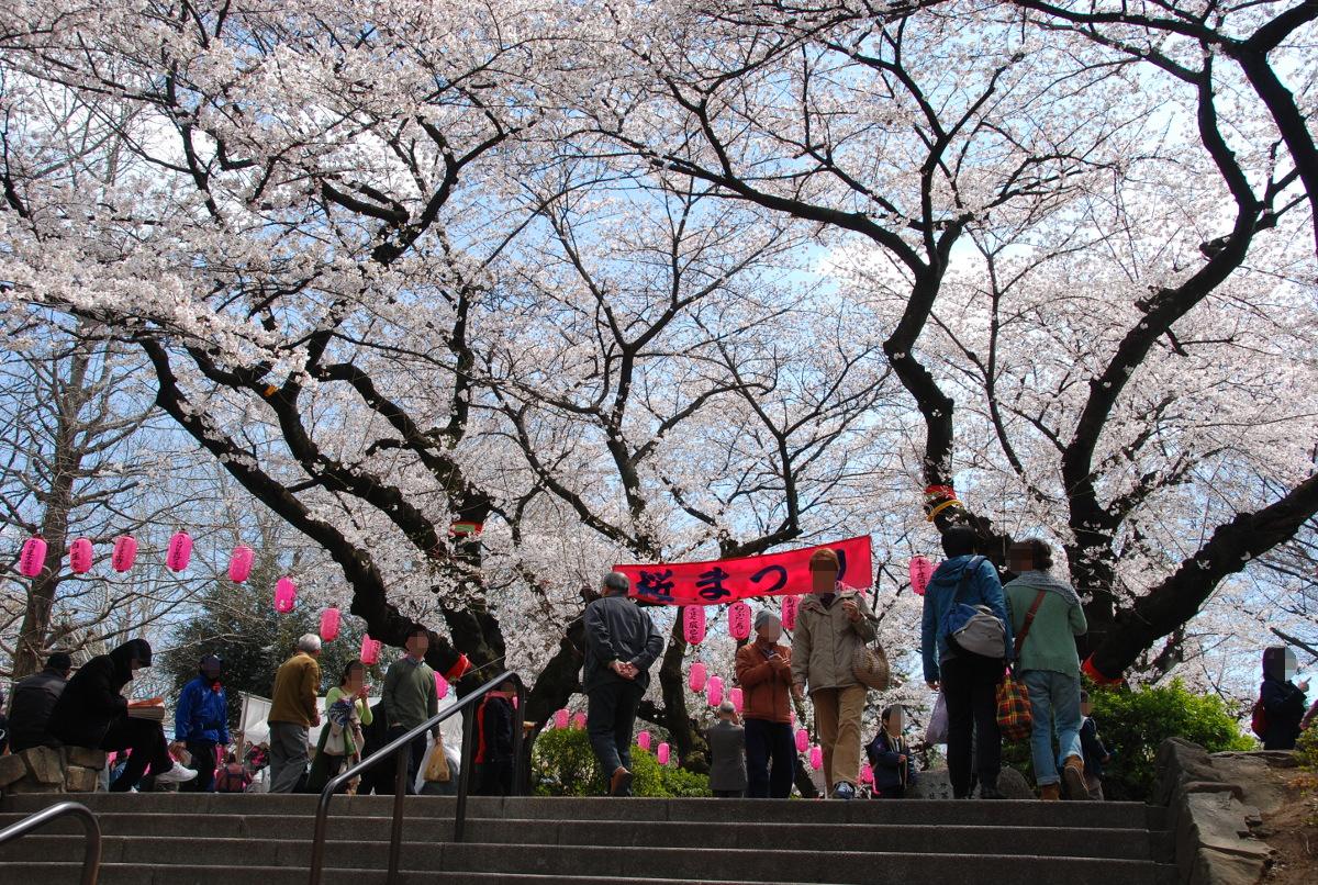 中野通り桜まつり-新井薬師公園