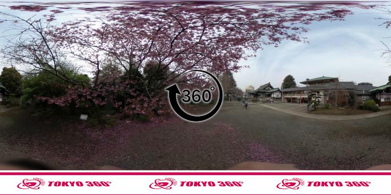 中野桜まつり-360度写真08