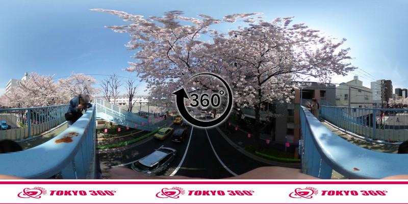 中野桜まつり-360度写真11