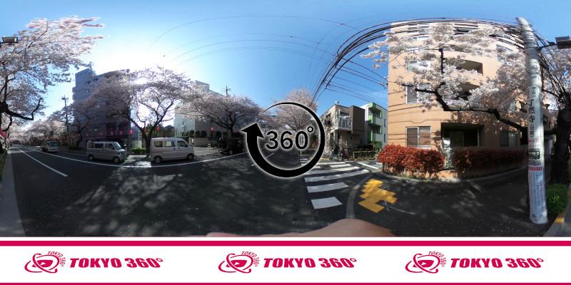 中野桜まつり-360度写真14