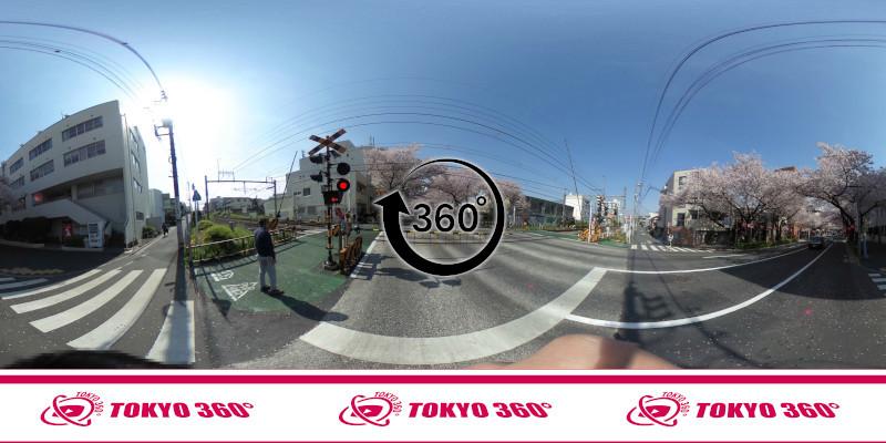 中野桜まつり-360度写真16