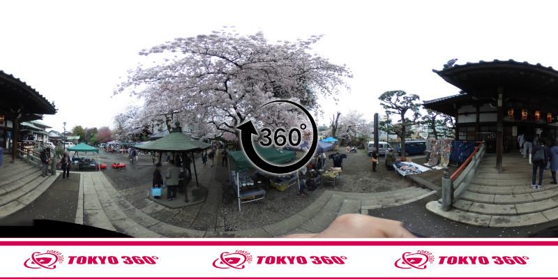 中野桜まつり-360度写真17