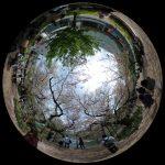 千鳥ヶ淵の360度写真集。さくら舞い散る花見の名所をバーチャル観光!