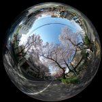 中野桜まつりの360度写真集。花見客であふれる新井薬師をバーチャル観光