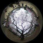 桜咲く新宿御苑の360度写真集。都心の定番花見スポットをバーチャル観光