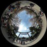 靖国神社(桜)の360度写真集。東京の標本木がある名所をバーチャル観光!