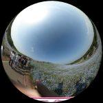 ひたち海浜公園のネモフィラを360度写真レポート。青の絶景をバーチャル体験!