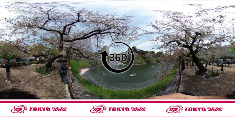 千鳥ヶ淵の桜-360度写真-04
