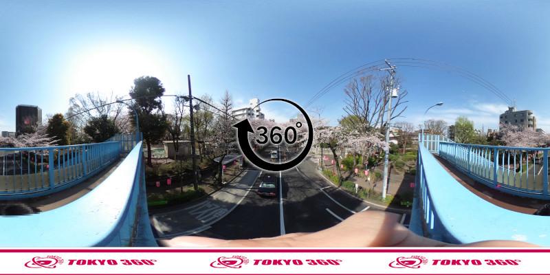 中野通りの桜並木-360度写真-04
