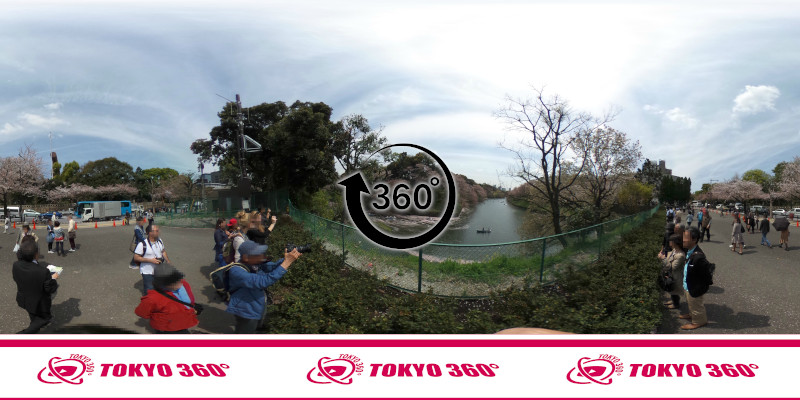 千鳥ヶ淵の桜-360度写真-05