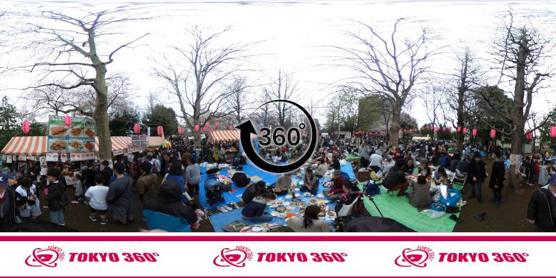 中野通りの桜並木-360度写真-07