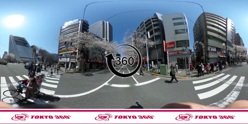 中野通りの桜並木-360度写真-10