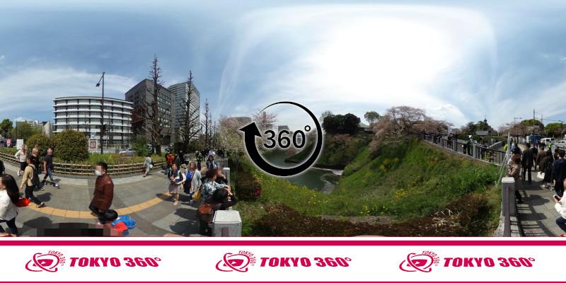 千鳥ヶ淵の桜-360度写真-10