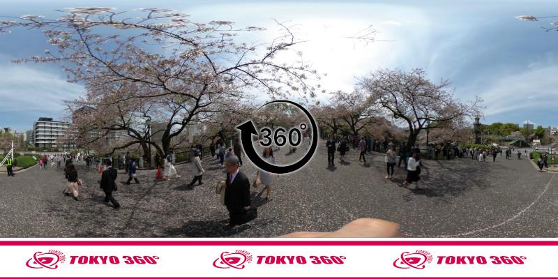 千鳥ヶ淵の桜-360度写真-11