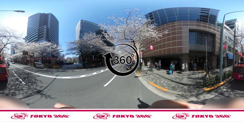 中野通りの桜並木-360度写真-11