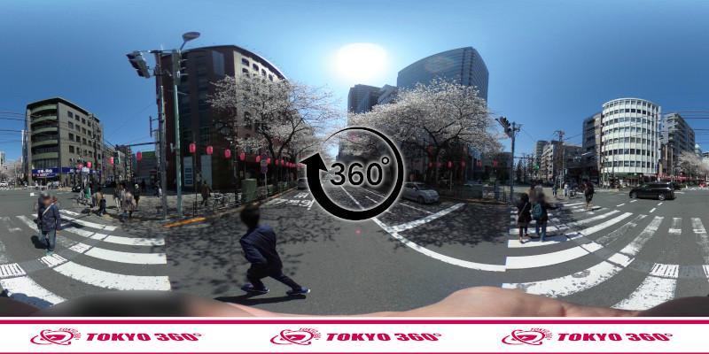 中野通りの桜並木-360度写真-12