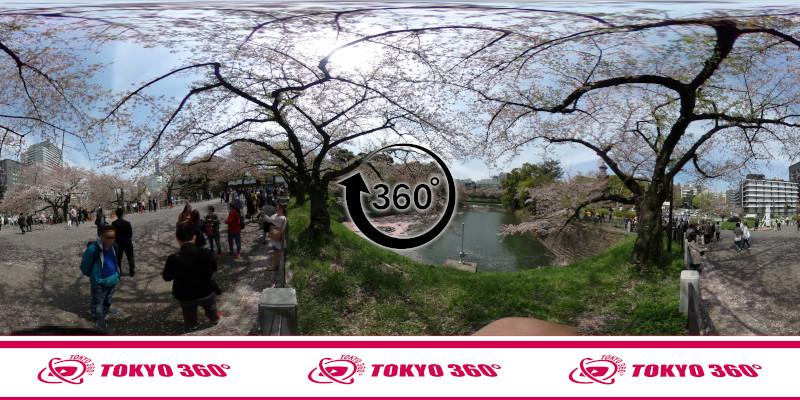 千鳥ヶ淵の桜-360度写真-13