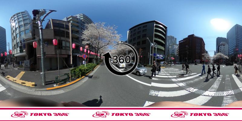 中野通りの桜並木-360度写真-13