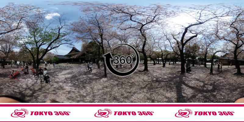 千鳥ヶ淵の桜-360度写真-15