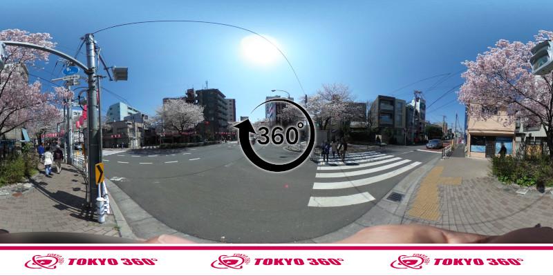 中野通りの桜並木-360度写真-17