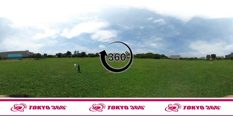 中野通りの桜並木-360度写真-24