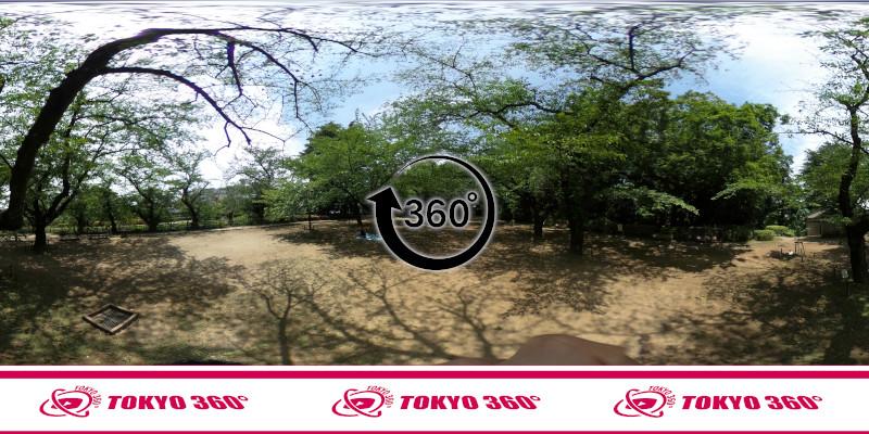 中野通りの桜並木-360度写真-25