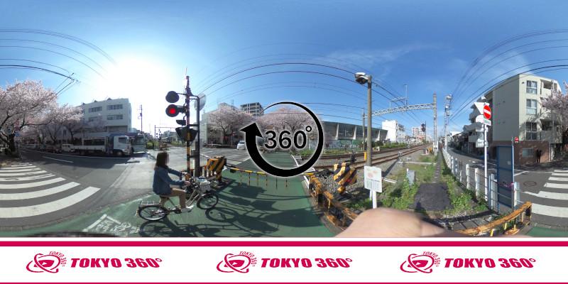 中野通りの桜並木-360度写真-27