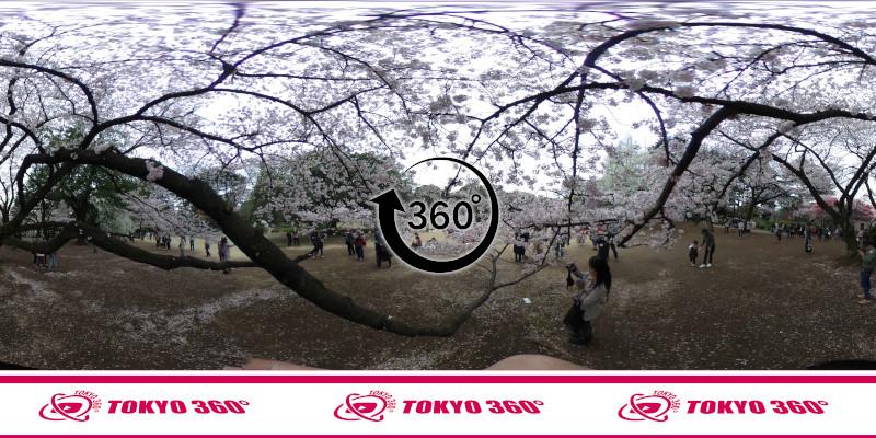 新宿御苑-360度写真-06