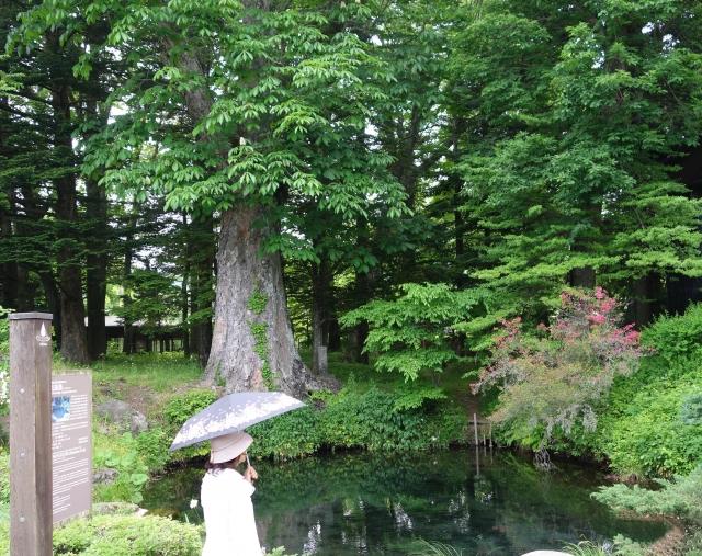 忍野八海-底抜池