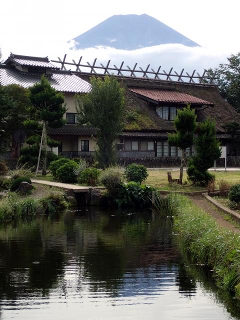 忍野八海-菖蒲池