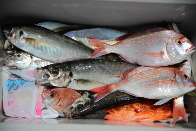 クーラーボックスに入った色んな魚