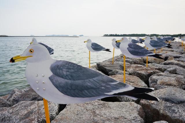 佐久島-カモメのアートがある海岸